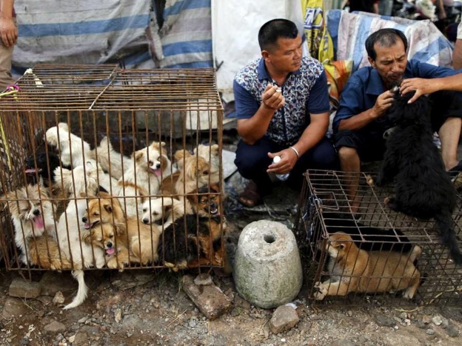 kinezi-ubijaju-jedu-pse